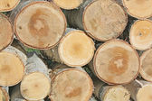 Background of sawn birch timber — Stock Photo