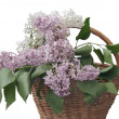 Lilac — Stock Photo #3335811