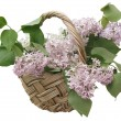 Lilac in the basket — Stock Photo