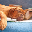 Tired dog asleep — Stock Photo