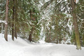 White forest — Stock Photo