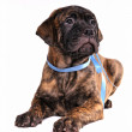 Beautiful Puppy — Stock Photo
