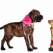 Puppy with a Cup — Stock Photo