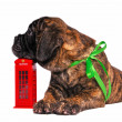 Puppy on a Telephone Booth - Stock Photo