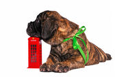 Puppy on a Telephone Booth — Stock Photo
