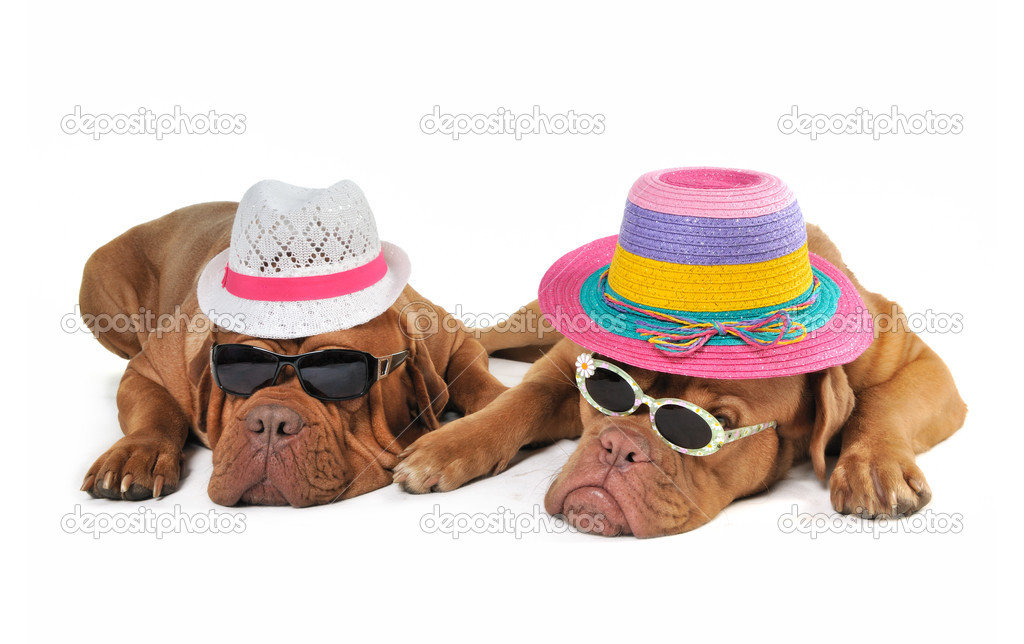 Two Dog in Beach Hats enjoying the Sunshine — Stock Photo #3351990