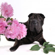 Black Dog with Flowers — Stock Photo #3374987