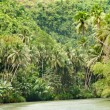 Tropical river — Stock Photo #3616059