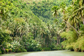 Tropical river — Stock Photo
