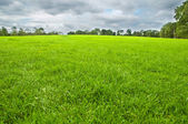 Green field and trees — Foto Stock