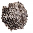 Wild honeycomb - Stock Photo