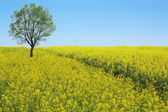 Spring scenery — Stock Photo