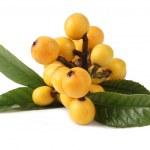 Loquat fruit — Stock Photo #3209732