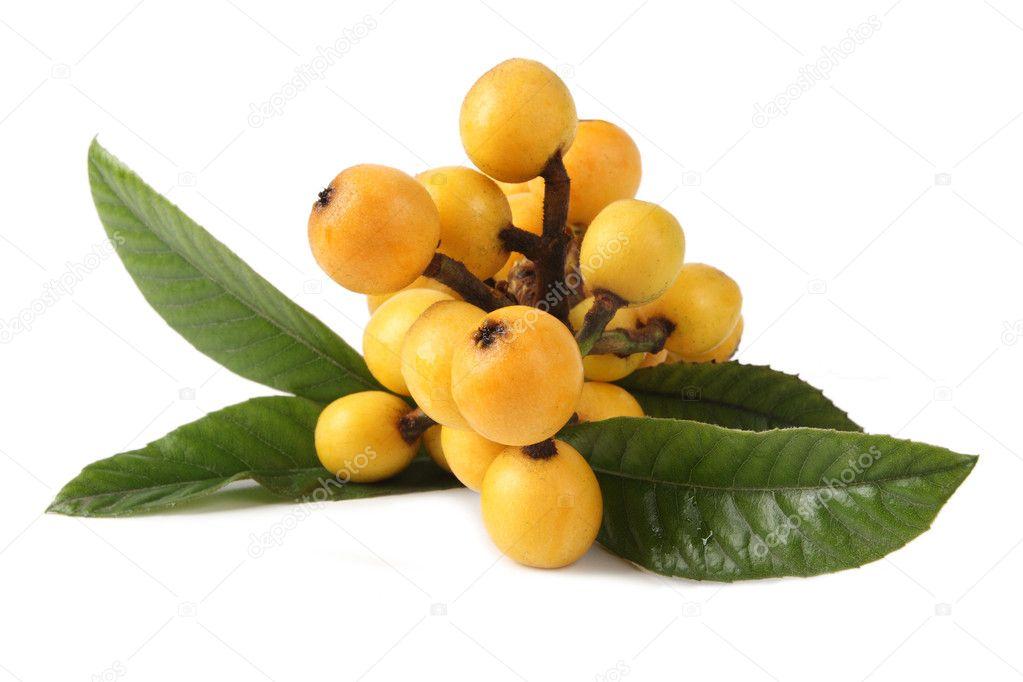 Nispero Fruta n Spero Frescas Frutas y Hojas