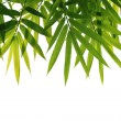 Bamboo leaves — Stock Photo #3671540