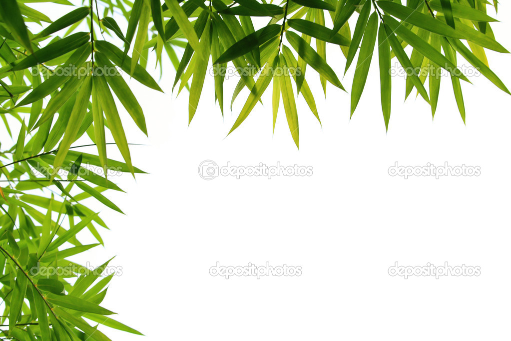 Bamboo leaves isolated on white — Stock Photo #3671535