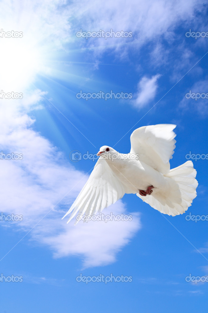 A free flying dove under the blue sky  — Photo #3900127