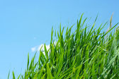 Solar sky and grass — Stock Photo