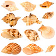 Seashells collection. — Stock Photo