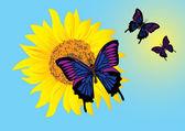 Sunflower with butterflies. Vector — Stock Vector