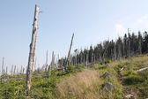 Dead wood / forest — Stock Photo