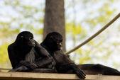 Monkey's — Stock Photo