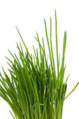 Chives in closeup — Stock Photo