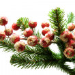 Little red christmas balls on a tree — Stock Photo