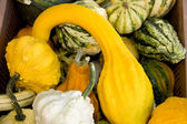 All kinds of gourds — Stock Photo