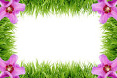 Frame made out of grass — Stock Photo