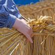 Stock Photo: Reed weaving