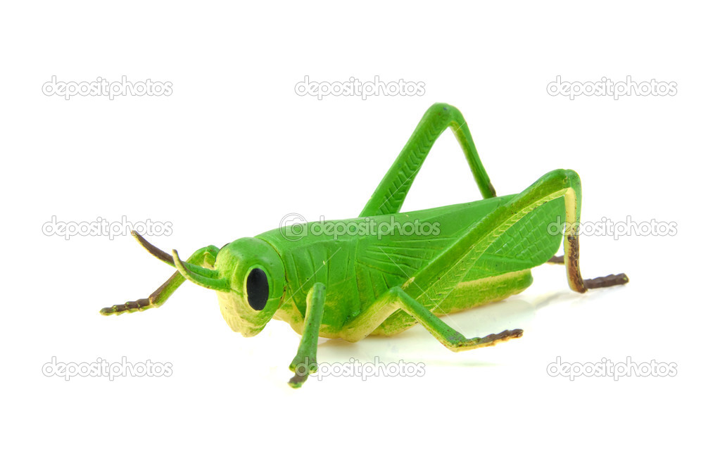 Green grasshopper plastic play toy - Stock Image