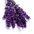 Plucked lavender — Stock Photo