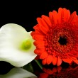 White Calla and red Gerber flowers - Stock Photo