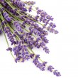 Stock Photo: Twigs lavender