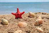 Red starfish on the beach — Stock Photo