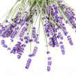 Stock Photo: Lavender over white background