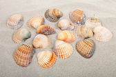Beach with shells — Stock Photo