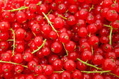Background of red berries — Stock Photo