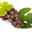Cluster of blue grapes — Stock Photo #3818615