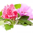 Stock Photo: Pink hibiscus and hortensiflowers