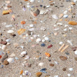 Background of shells on the beach — Stock Photo