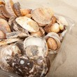 Pile of shells on beach — Stock Photo