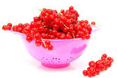Pink colander with red currant berries — Stock Photo