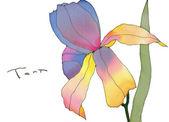 Batik iris isolated — Stock Photo