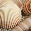Seashells assortment - Stock Photo