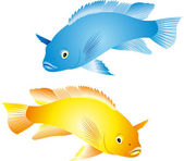 Cichlidae vector — Stock Vector