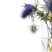 Funky purple flowers — Stock Photo