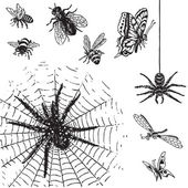 Conjunto de insetos antigos (vector) — Vetor de Stock