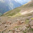 Стоковое фото: Roe deer high in mountains